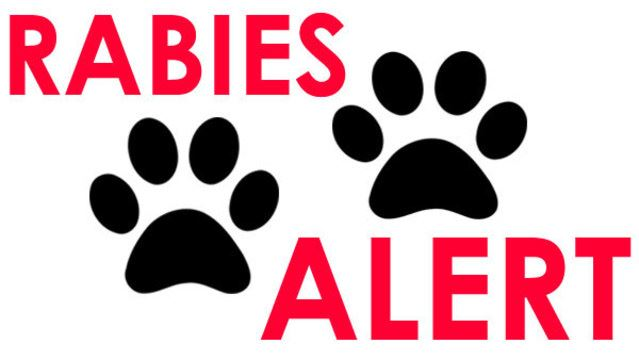 Image that says the words rabies alert